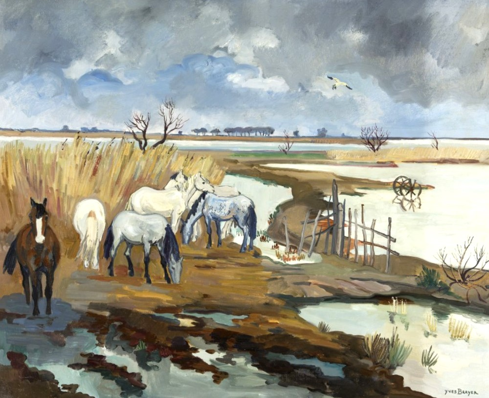 Camargue horses in autumn, 1963