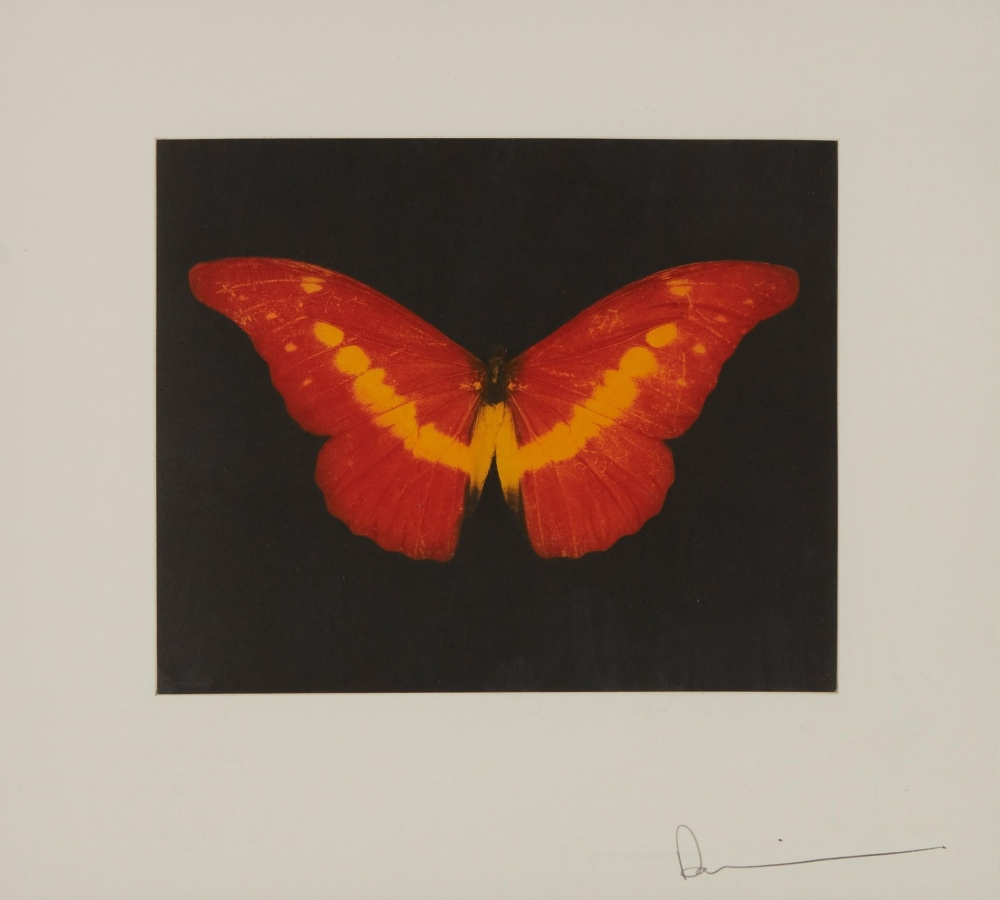To lose a red butterfly, 2008