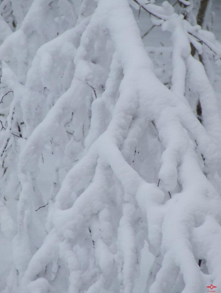 Lyric Winter Abstraction 2014